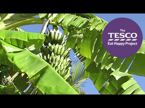 Costa Rica, Home of Bananas