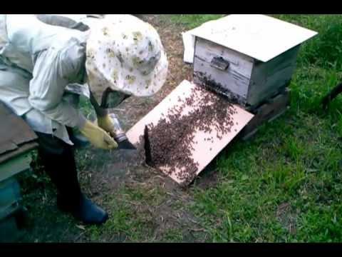 Как сажать пчел в новый улей 53