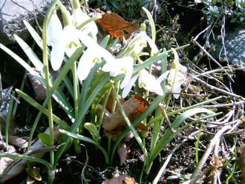 Spring on bohdasine - jaro na bohdašíně