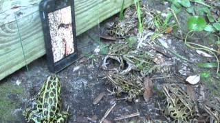 Troll mấy con ếch này không khó