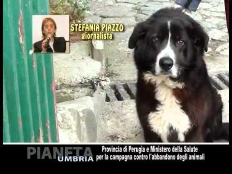 Provincia di Perugia contro l'abbandono degli animali