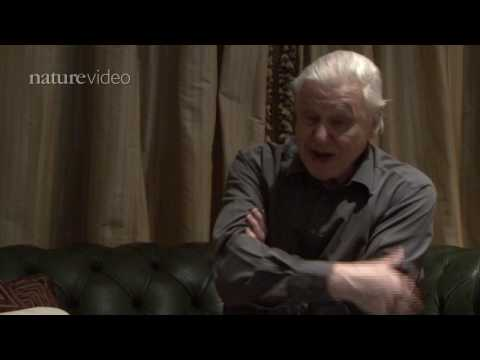 PART 2: David Attenborough on birds of paradise - by Nature Video