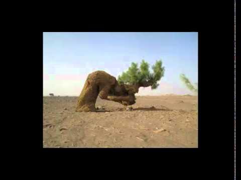 شجرة تسجد لله سبحان الله مقطع رائع بصوت القارئ توفيق العايدي Music Videos