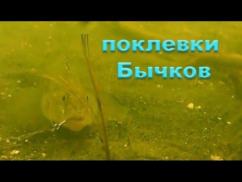 ловля на поплавочную удочку на азовском море