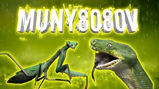 #MONY8080 (Snake VS grasshopper) good