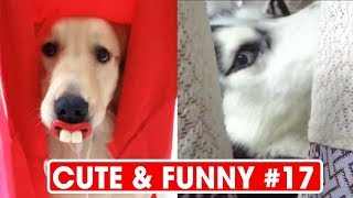 Animals Doing Things - Funny Cat & Dog Videos Compilation (2018) ♥ I Love Pets #17  #cat #funny