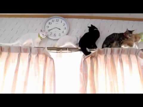 Скалолаз 2. В главных ролях кошки