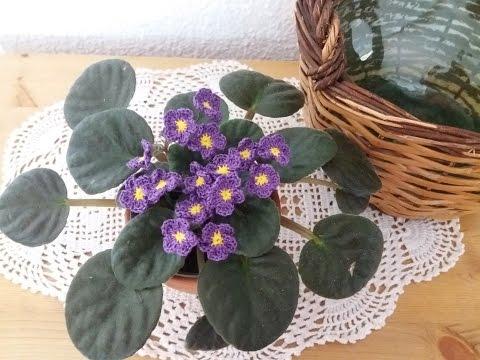 saintpaulia blomma