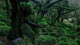 Spooky Music - Wistman's Wood