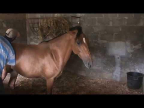Estrelinha, Égua Cruzado Nacional Em 9 De Junho De 2013 video
