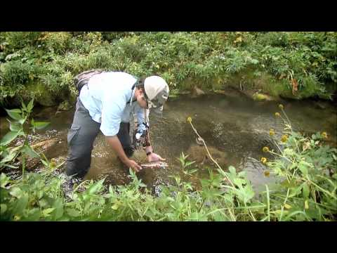 Fly Fishing for Fall Brook Trout