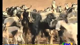 Ethiopian Amharic Day news December 31, 2015