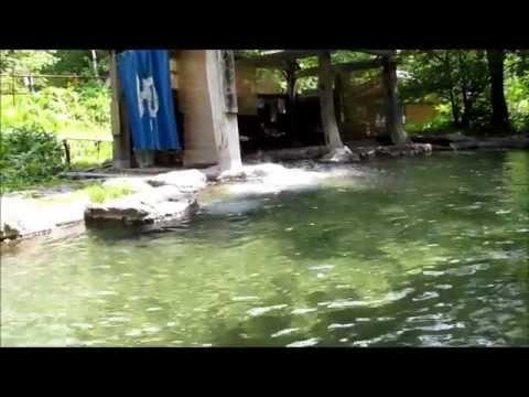 奥飛騨温泉郷 合掌の森 2011.07.26