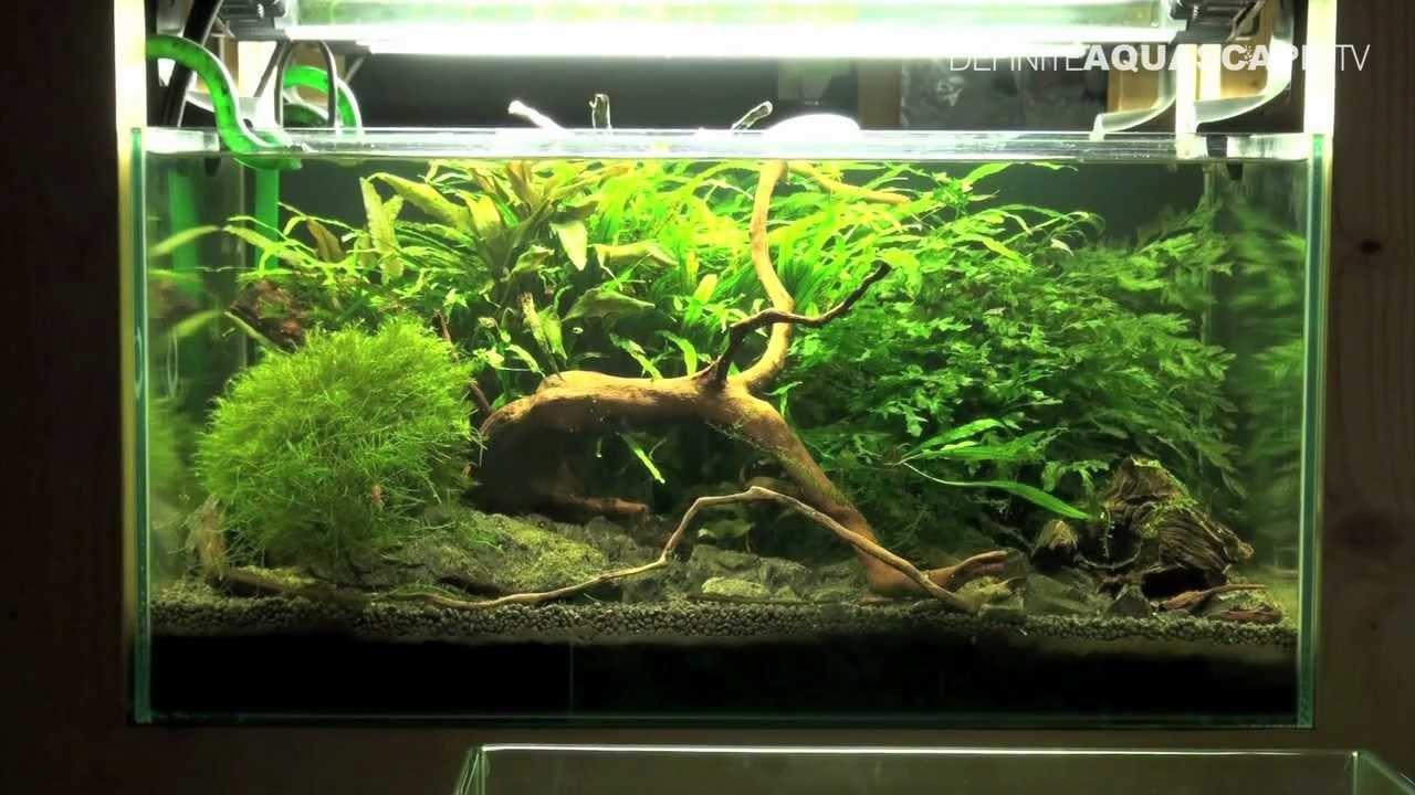 Aquarium Ideas Planted Tank 60x40x30 No 2 Cambarellus
