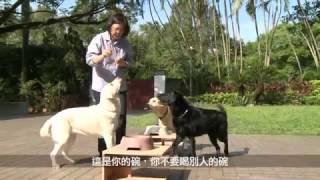 總統府獨家曝光 小英與狗家人的甜蜜互動