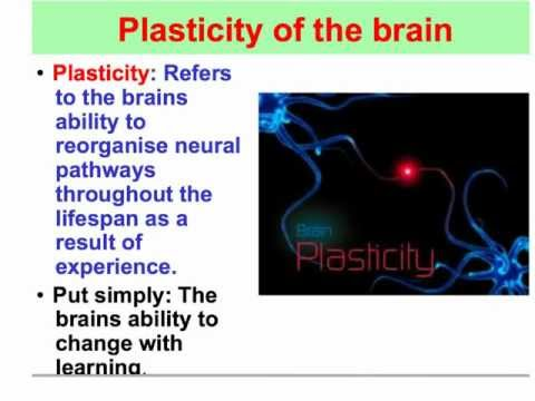 what is neuroplasticity in psychology