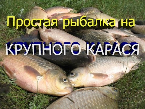 Рыбалка удочкой. Простая рыбалка на крупного карася. 06.05.2016. Simple fishing.