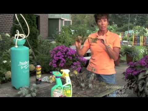Pest Control Tips (Bagworms. Slugs. Yellow Jackets)