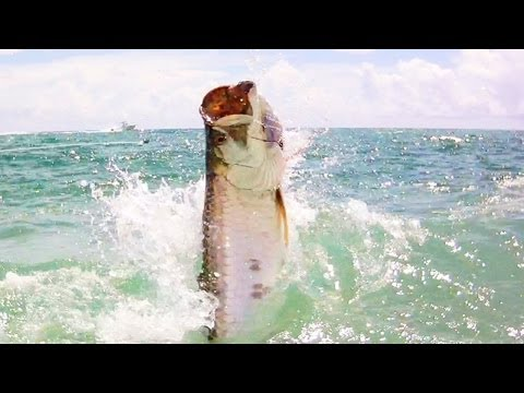 Tarpon Fishing on the Beach