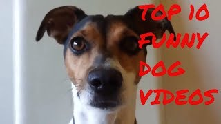 TOP 10 dog barking videos compilation 2018  Dog barking sound   Funny dogs