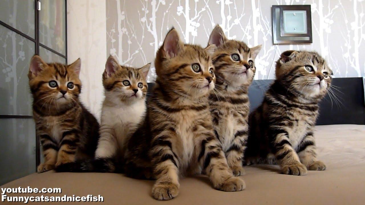 Funny Cats Choir   Dancing Chorus Line of Kittens - YouTube