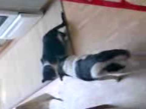 Sex Dog And Cat Part6 video