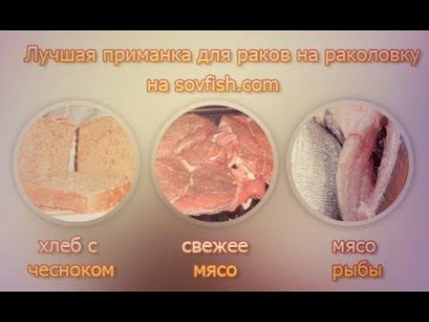 на что ловят раков в раколовки осенью