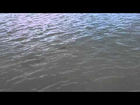Lower Laguna Madre Gator Trout 2