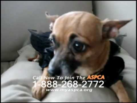 Sarah McLachlan ASPCA Ad Against Internet Animal Cruelty