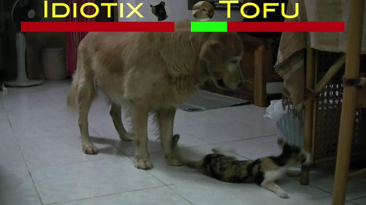 Dog Cat Tv Show