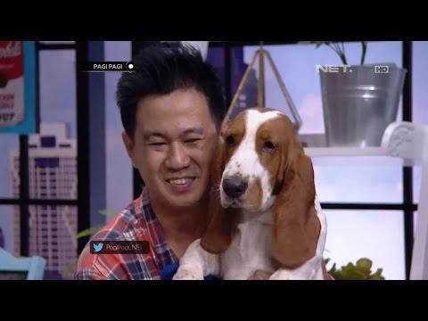 download lagu Anjing Jenis Basset Hound Yang Ramah Dan Agresif gratis