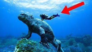 WEIRDEST Reptiles In The World!