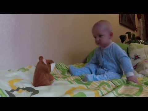 Говорящий хомяк учит младенца разговаривать!!!