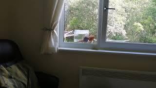 Squirrel in bird feeder in Aberdeen scotland