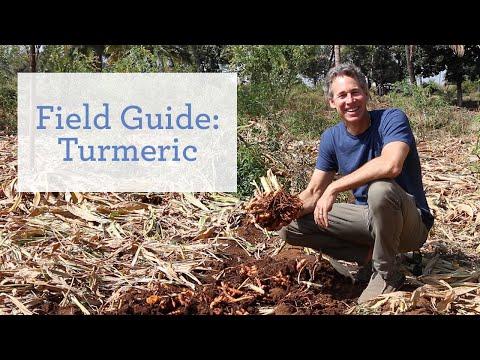 Turmeric - An Ayurvedic Super Food