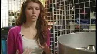 Cotton Candy : Renting a Cotton Candy Machine