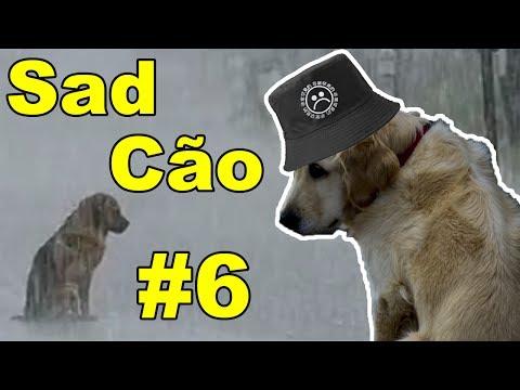 Sad Stories - O Cão