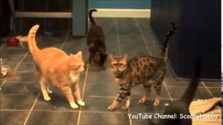 5  Cats Kissing1