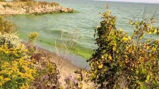 Algal Bloom, Lake Erie, Oct. 8 2011