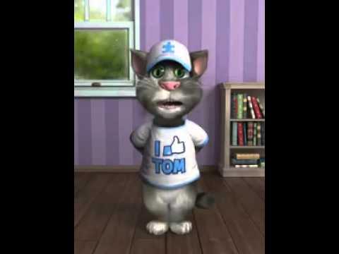 Il Gatto Tom E... Le Previsioni Del Tempo!!!