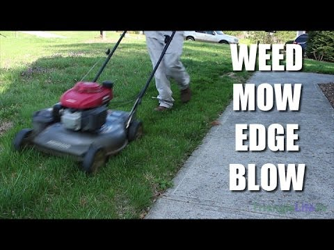 Professional Lawn Care: Weed/Mow/Edge/Blow