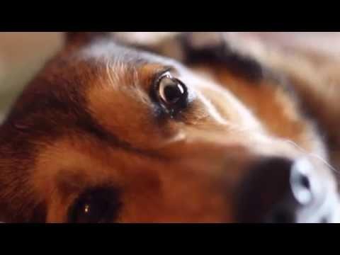 Dog Porn video