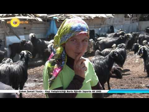 Çoban İsmail Tüzün - Keçi Yetiştiriciliği B MP3...