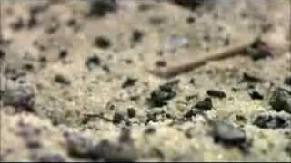Thumb Video de Mantis Religiosa versus Ratón, ya verás quien gana