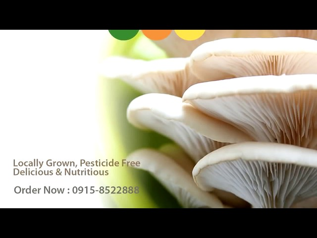 Oyster Mushroom Farm Grown Locally @ Silang Cavite, Philippines :)