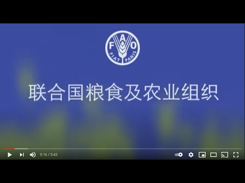 Promotion in Mandarin Chinese for Food and Agriculture Organization (FAO) of UN