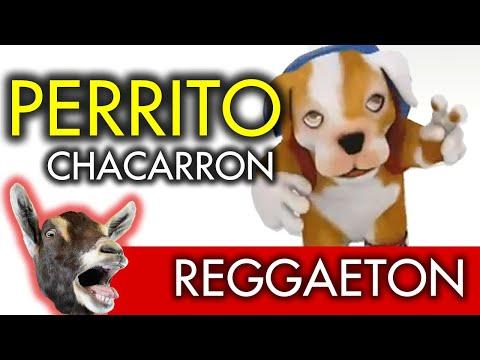 Factor X Xs Perrito Bailando y Cantando Regueton
