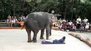download lagu Sumatera Elephant Show Part #2 Taman Safari gratis