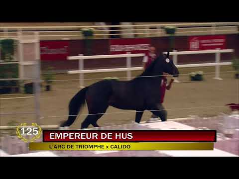 change_video_youtube2('pOYSxszMCE4','EMPEREUR DE HUS - N° 125 VENTES FENCES 2017');
