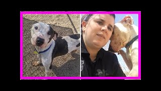 | Dog Rescue StoriesDog Who Suffered In Silence Needs Help To Get A Second Chance